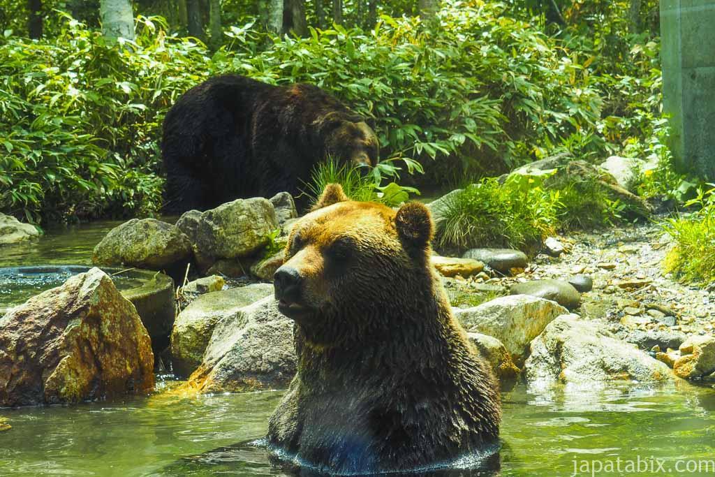 ベアポイントでヒグマを間近に見る