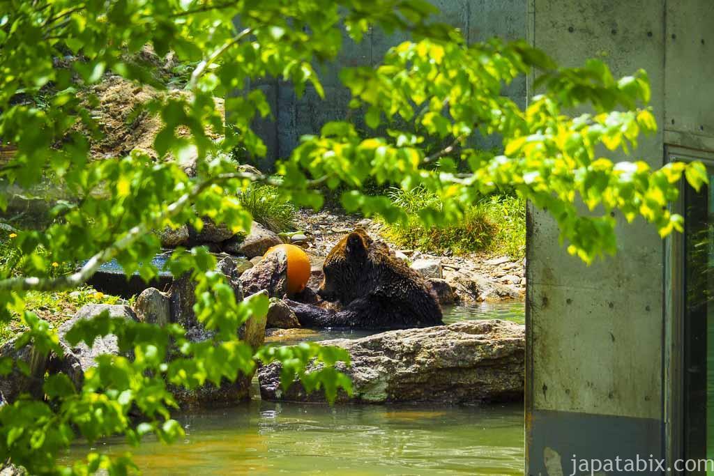 ベアポイントで遊ぶヒグマを遊歩道から見る