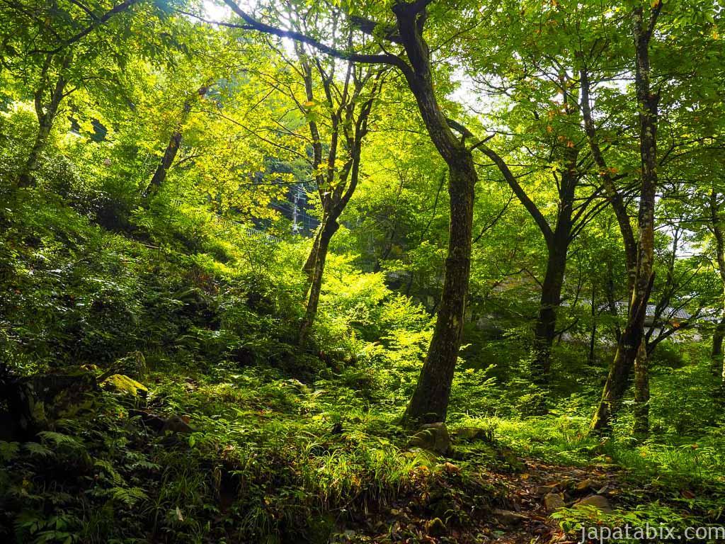 四万川 大泉の滝