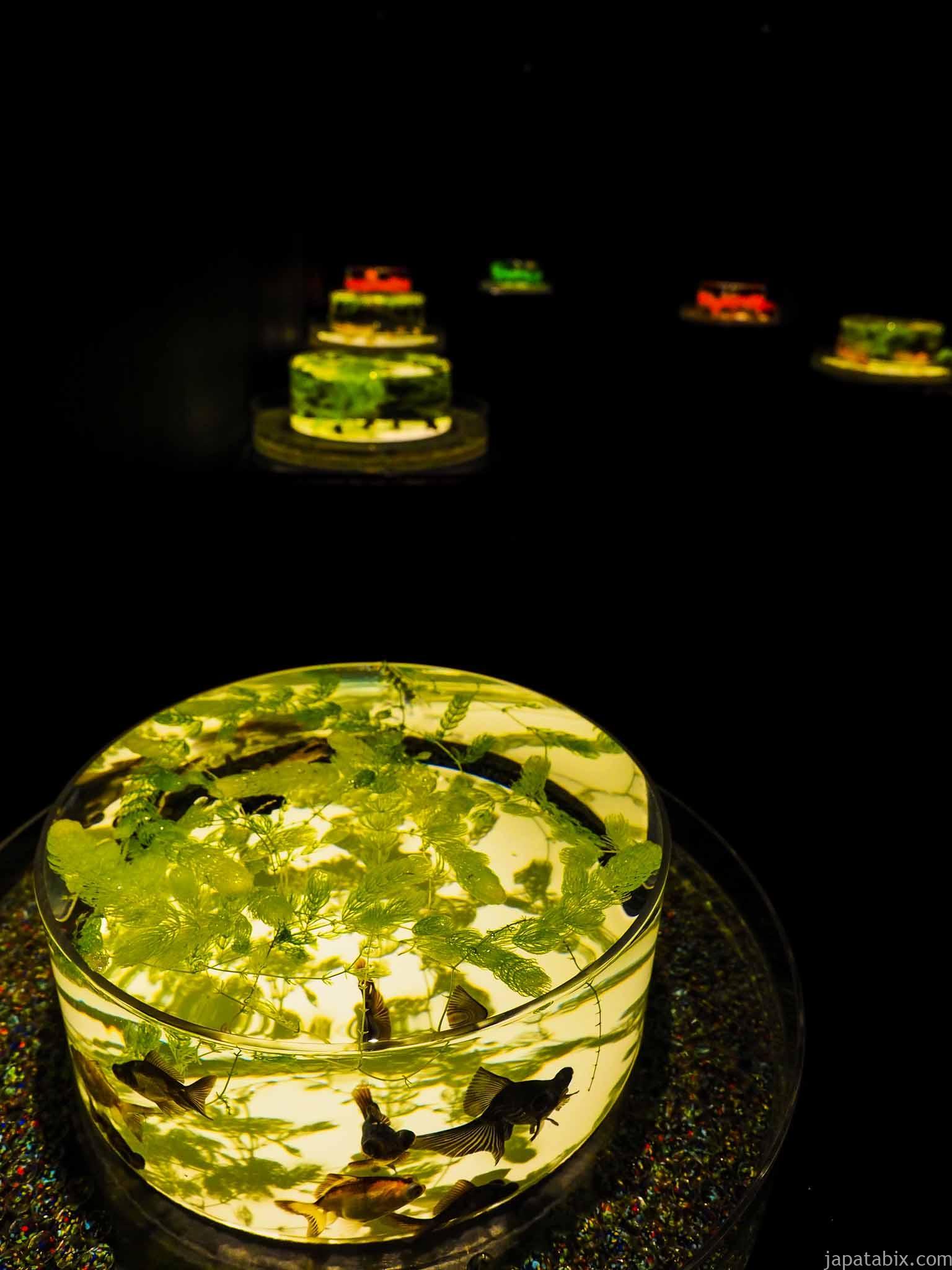 アートアクアリウム美術館 金魚品評 平日夜20時頃の混雑具合