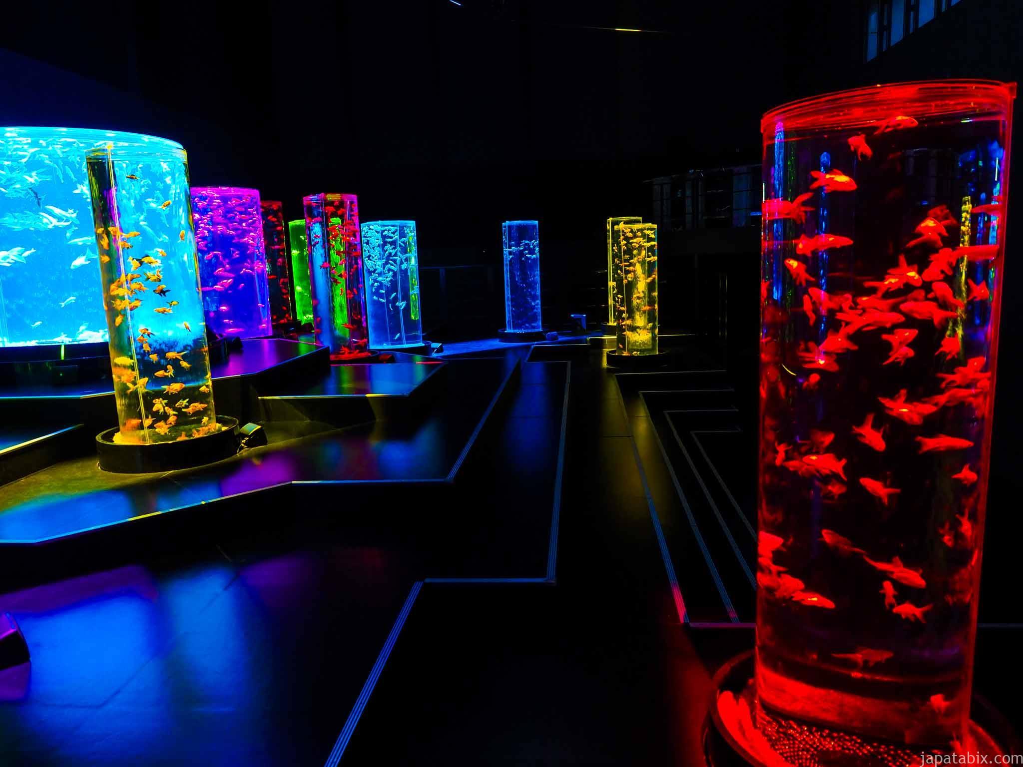 アートアクアリウム美術館 金魚の杜