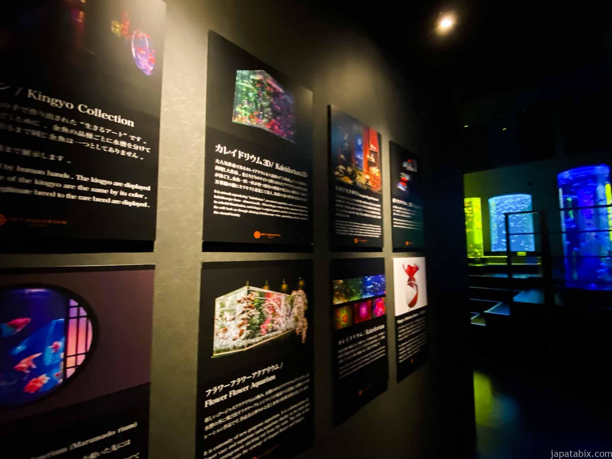 アートアクアリウム美術館 展示内容の説明