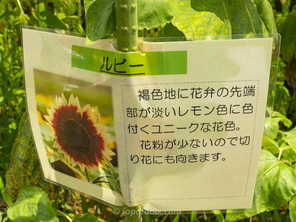 ひまわりガーデン武蔵村山 ルビー