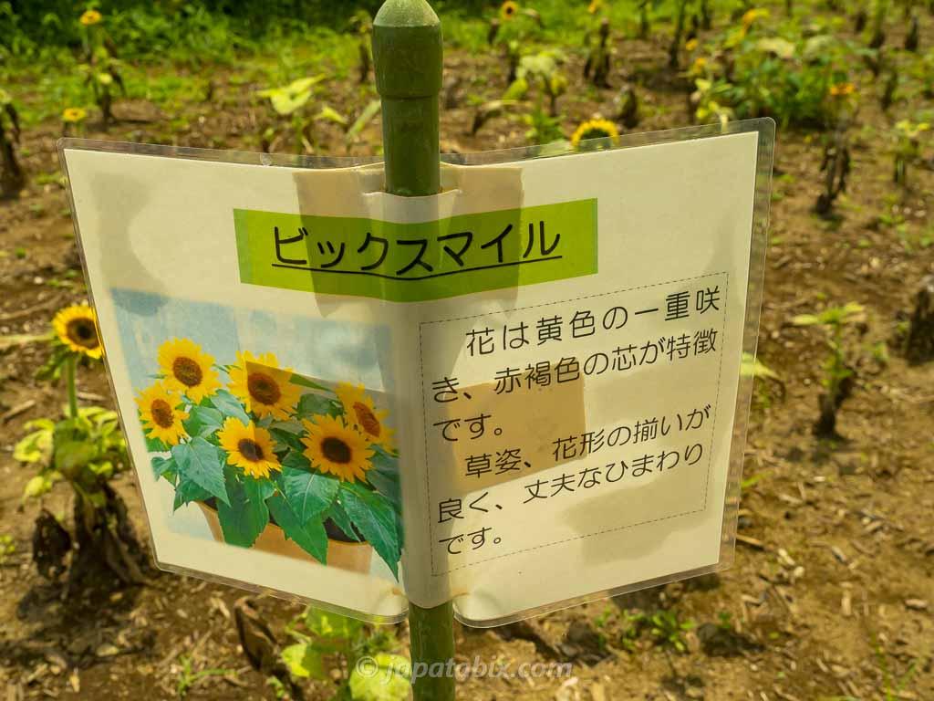 ひまわりガーデン武蔵村山 ビッグスマイル