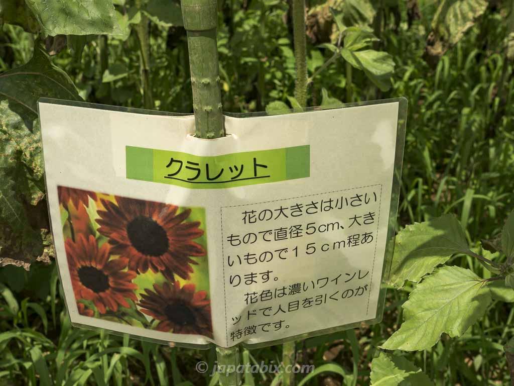 ひまわりガーデン武蔵村山 クラレット