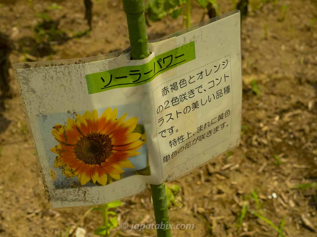 ひまわりガーデン武蔵村山 ソーラーパワー
