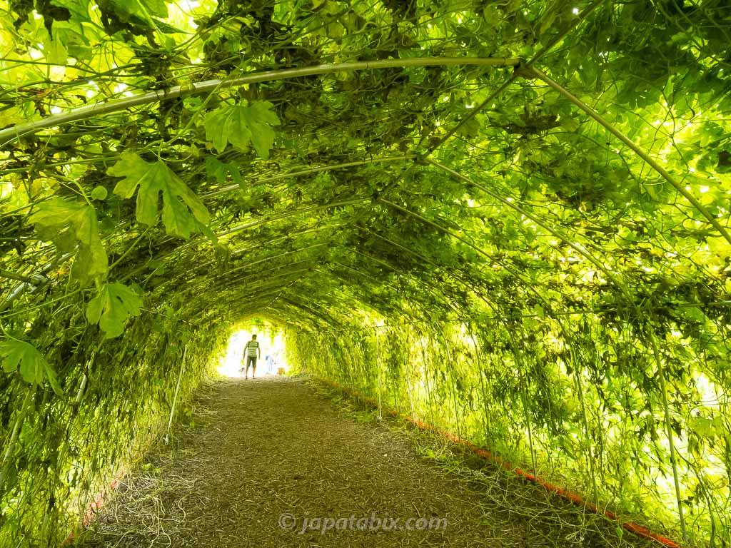 ひまわりガーデン武蔵村山 ゴーヤのトンネル