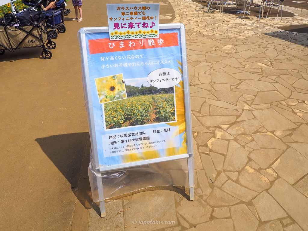 成田ゆめ牧場 ひまわり散歩会場