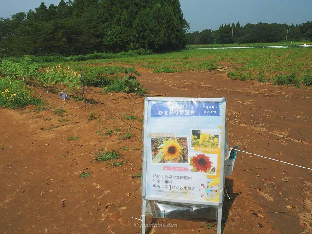 成田ゆめ牧場 世界のひまわり博覧会