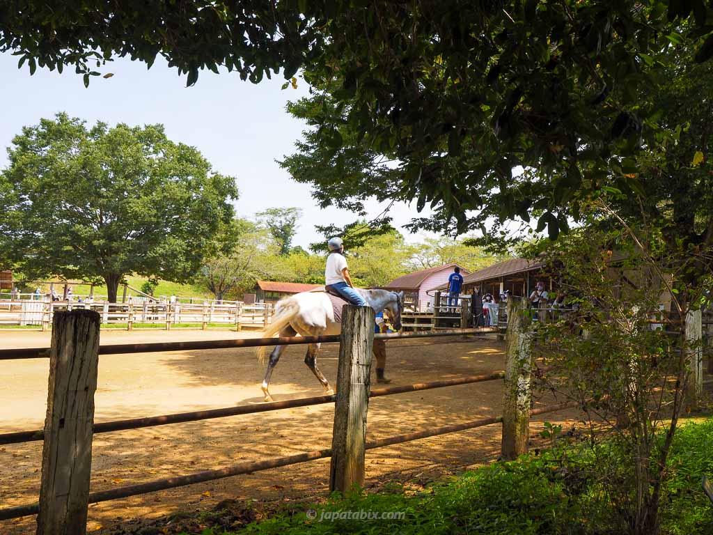 成田ゆめ牧場 乗馬体験