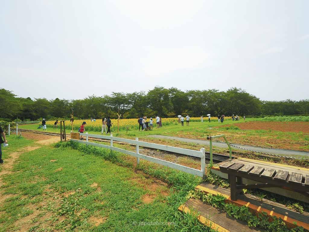 成田ゆめ牧場 第2ゆめ牧場農園のひまわり畑へ
