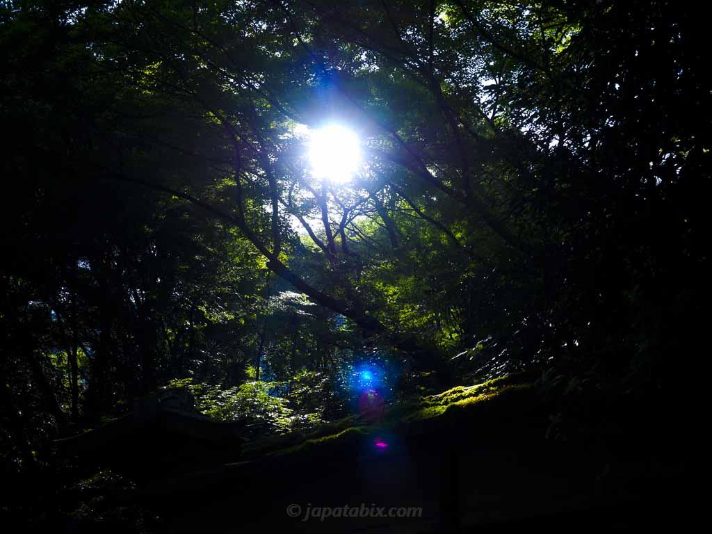 瑠璃光院 朝日に照らされたの青もみじ