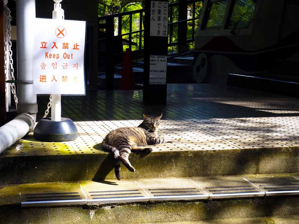 ケーブル八瀬駅にて日向ぼっこするネコ