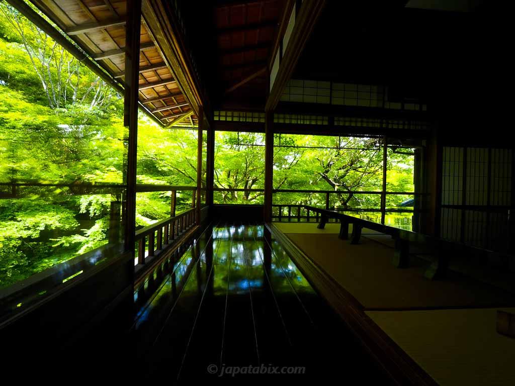瑠璃光院 書院2階から見る瑠璃の庭の青もみじ