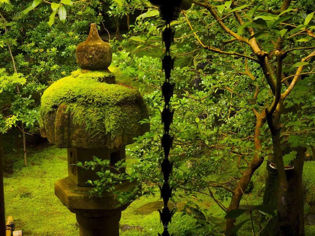 瑠璃光院 玄関前の石灯籠の苔