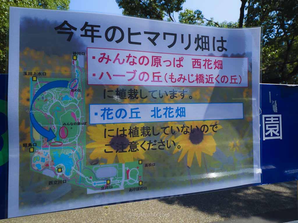 国営昭和記念公園 2020年当時のひまわり畑の位置
