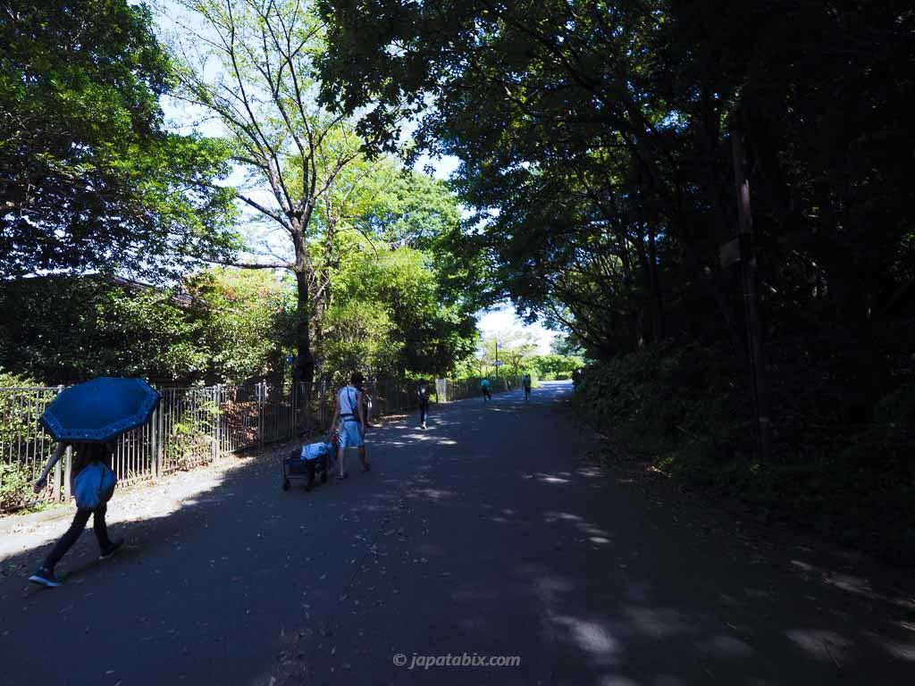 国営昭和記念公園 立川口からひまわり畑までの道のり