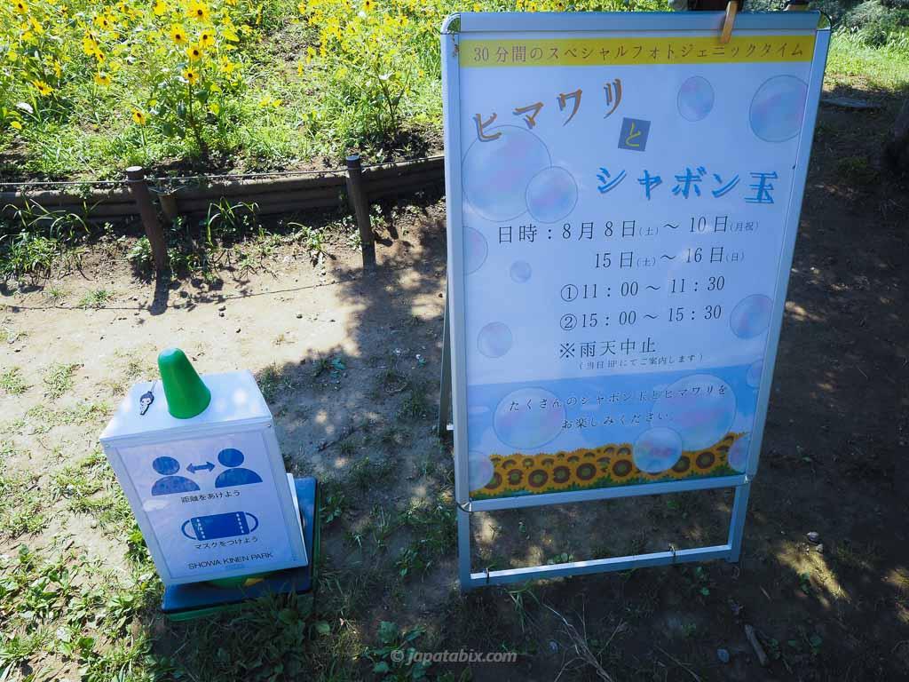 国営昭和記念公園 ひまわりとシャボン玉の時間帯