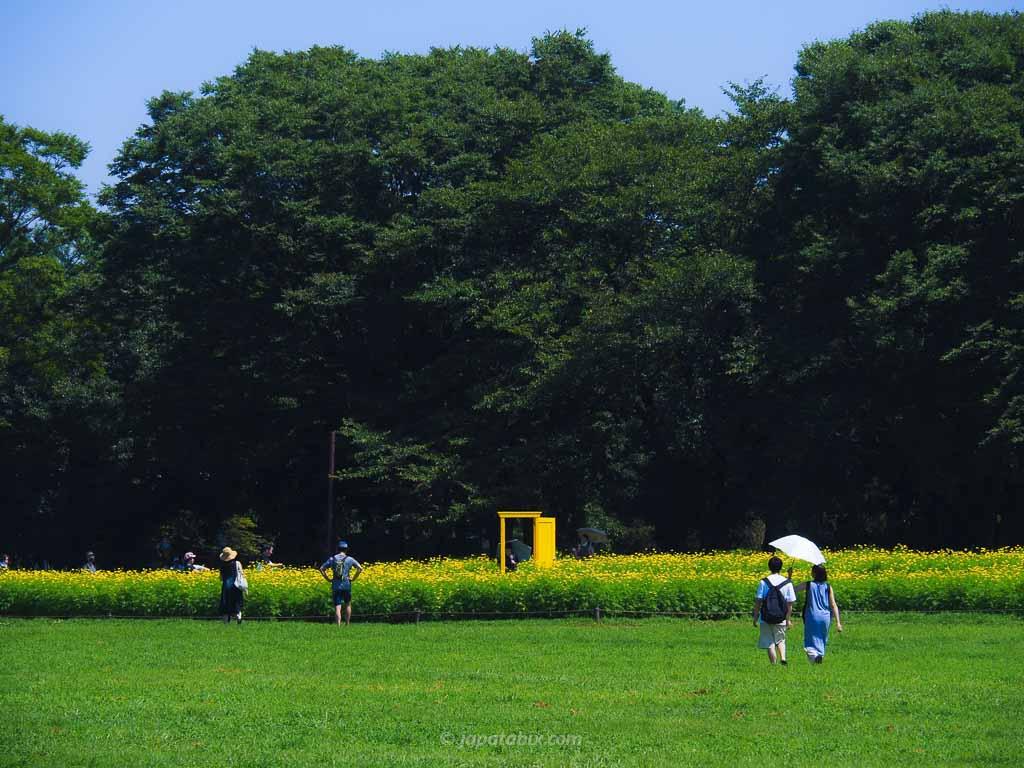 国営昭和記念公園の原っぱ