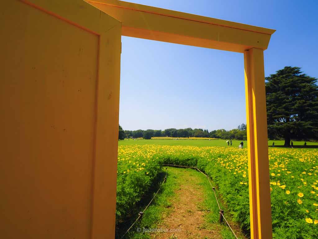 原っぱ東花畑の黄色いドアの向こう