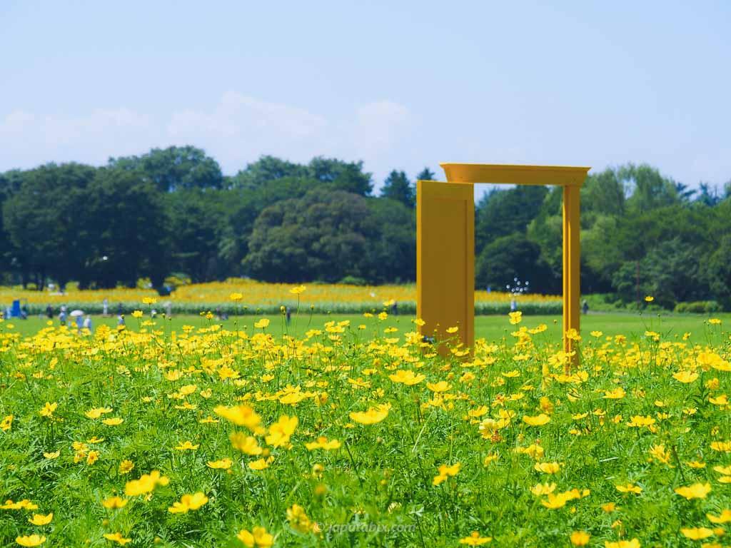 原っぱ東花畑のレモンブライトと黄色いドア