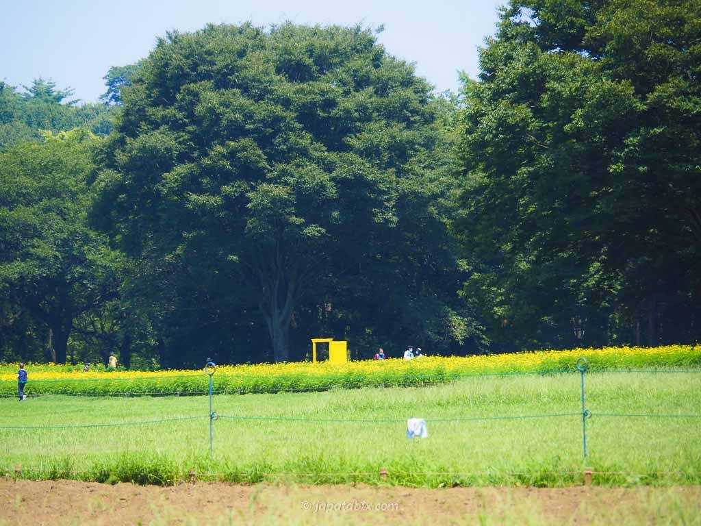 原っぱ東花畑の黄色いドアを離れてみる
