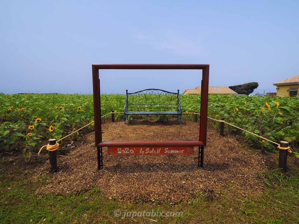ソレイユの丘 ひまわり畑の撮影スポット