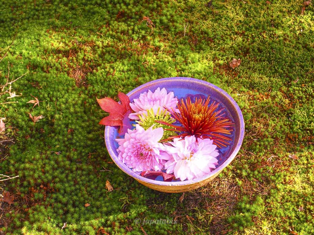 京都 勝林寺の花と散りモミジ