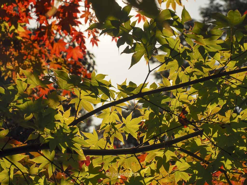 京都 勝林寺 紅葉