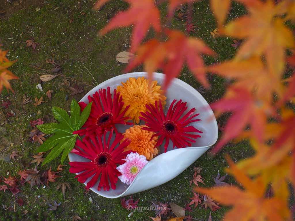 京都 勝林寺の花と紅葉