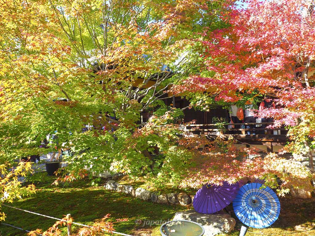 京都 勝林寺 和傘と紅葉