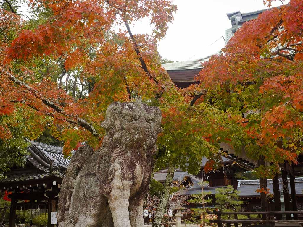 京都 今宮神社 狛犬と紅葉