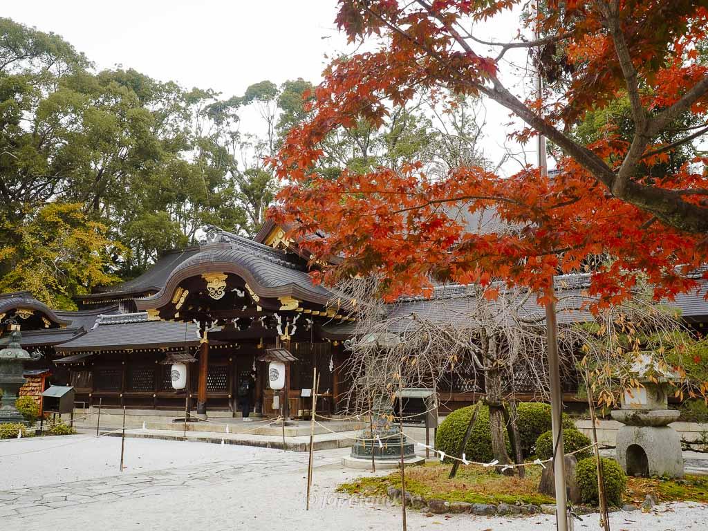 京都 今宮神社 本社と紅葉