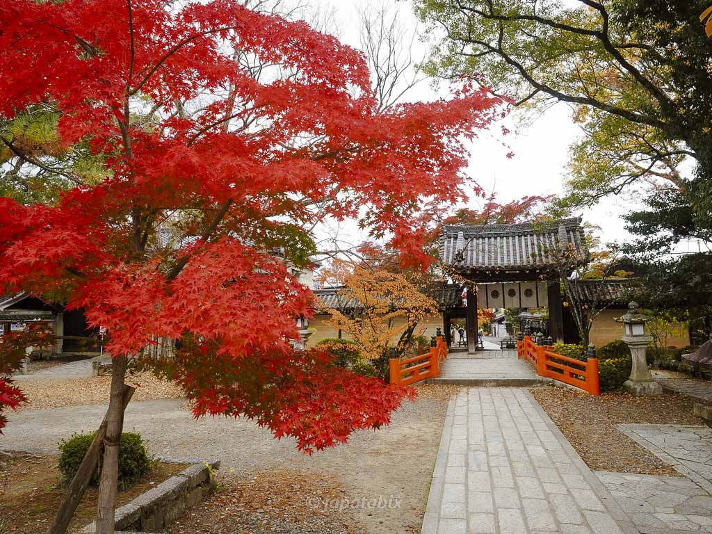 京都 今宮神社 神橋と紅葉