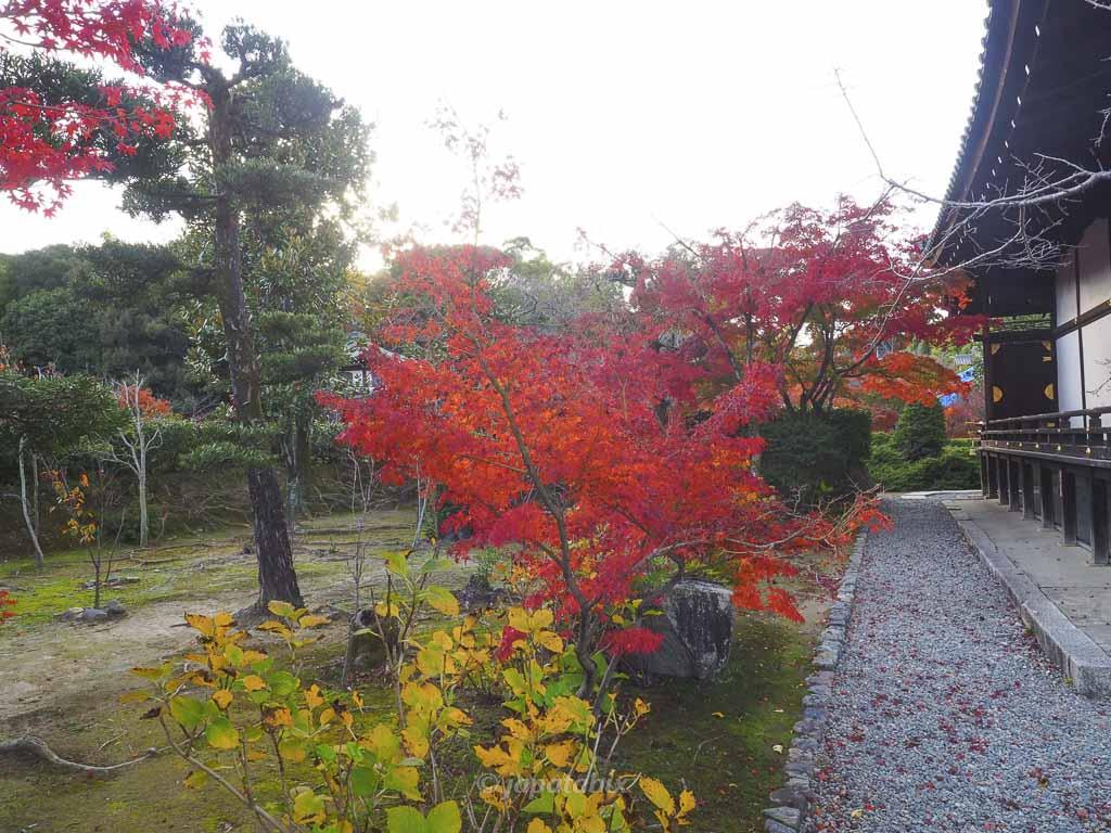 京都 勧修寺 宸殿 紅葉