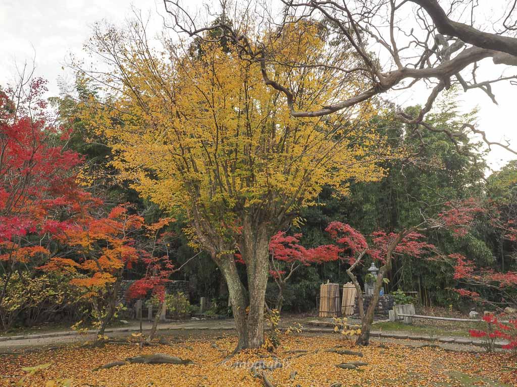 京都 勧修寺 本殿周辺の紅葉