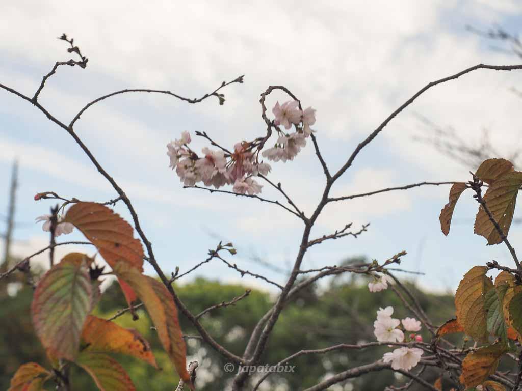 京都 名勝 勧修寺庭園の紅葉