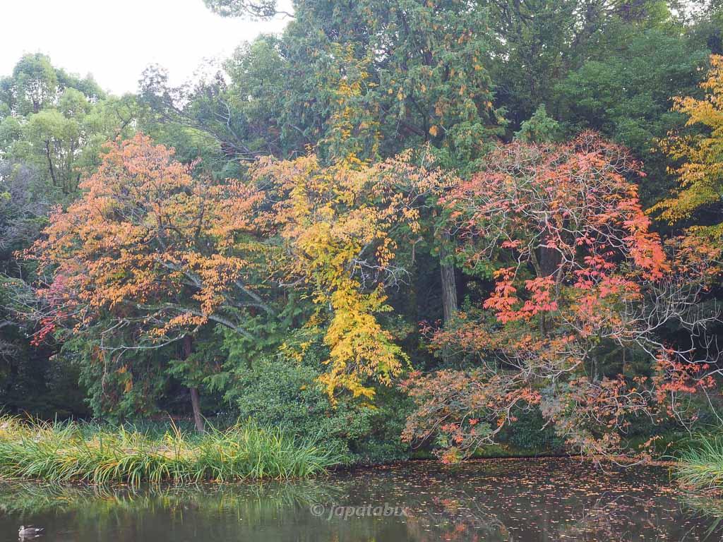 京都 名勝 勧修寺庭園 氷室池ほとりの紅葉