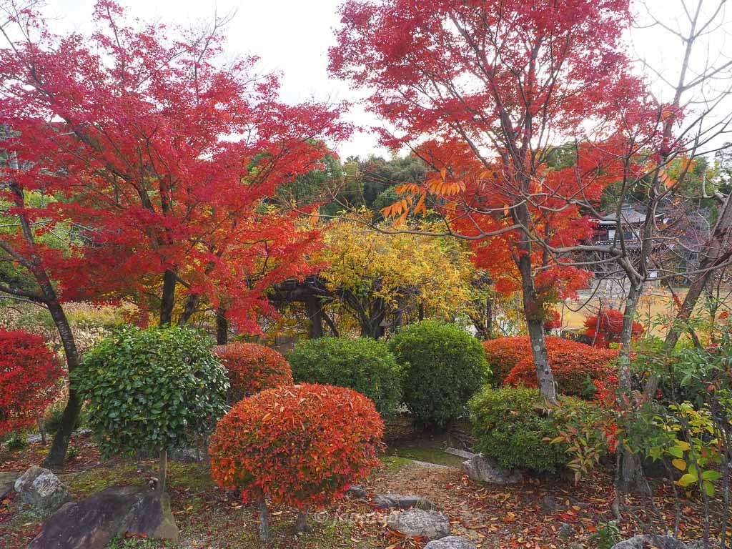 京都 名勝 勧修寺庭園 氷室の池