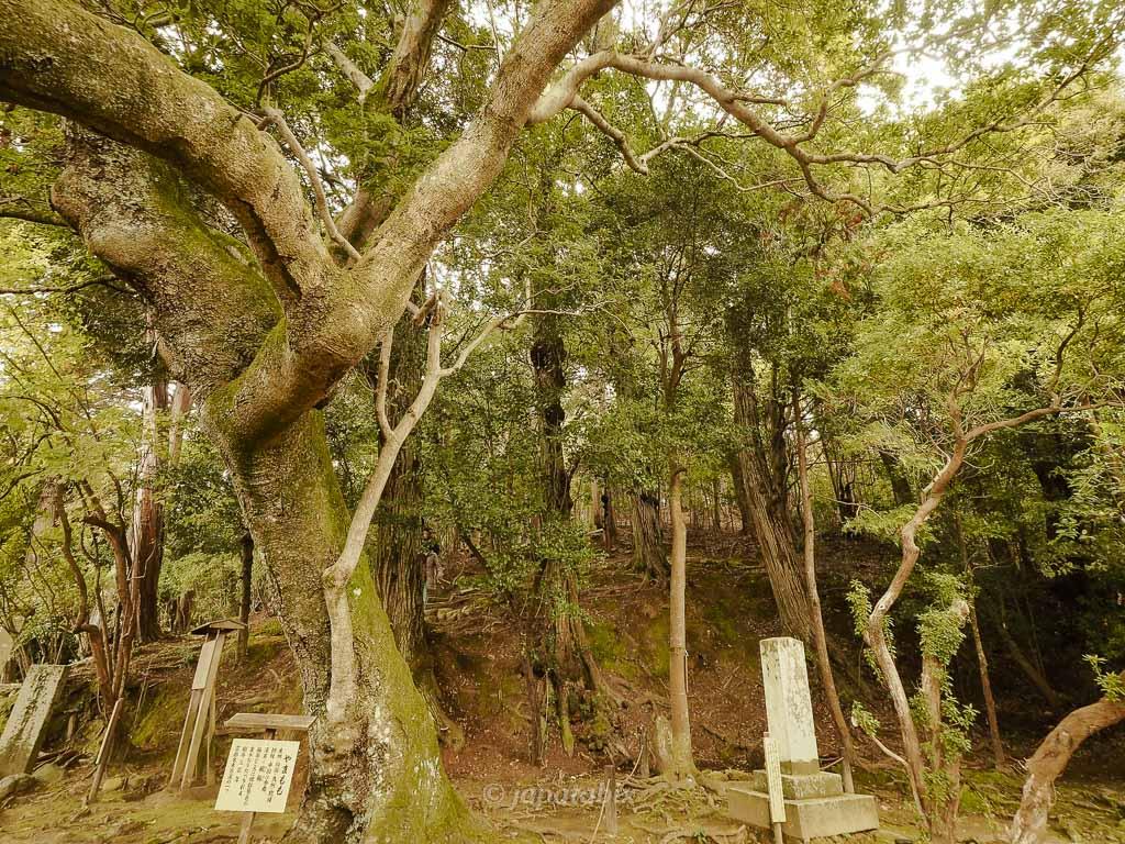 京都 金福寺 俳人の墓へ