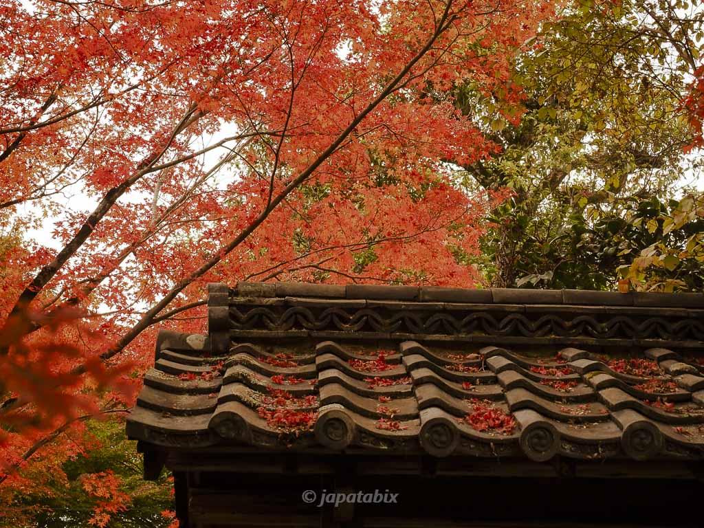 京都 金福寺 境内の紅葉
