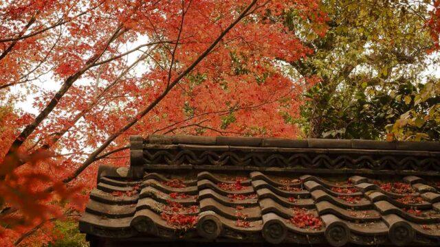 京都 金福寺の紅葉