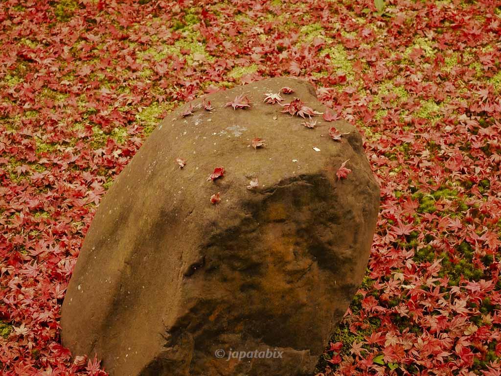 京都 金福時の紅葉