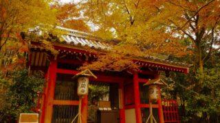 京都 金蔵寺の紅葉
