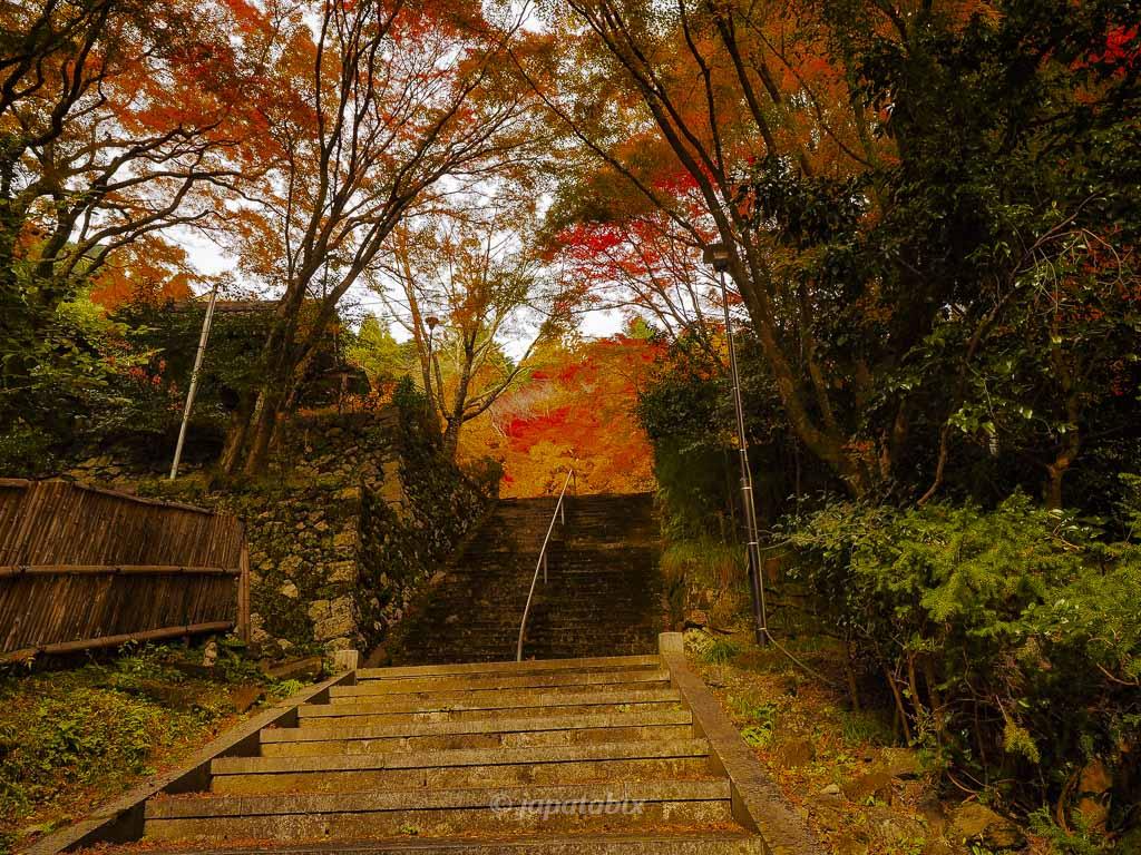 京都 金蔵寺 参道