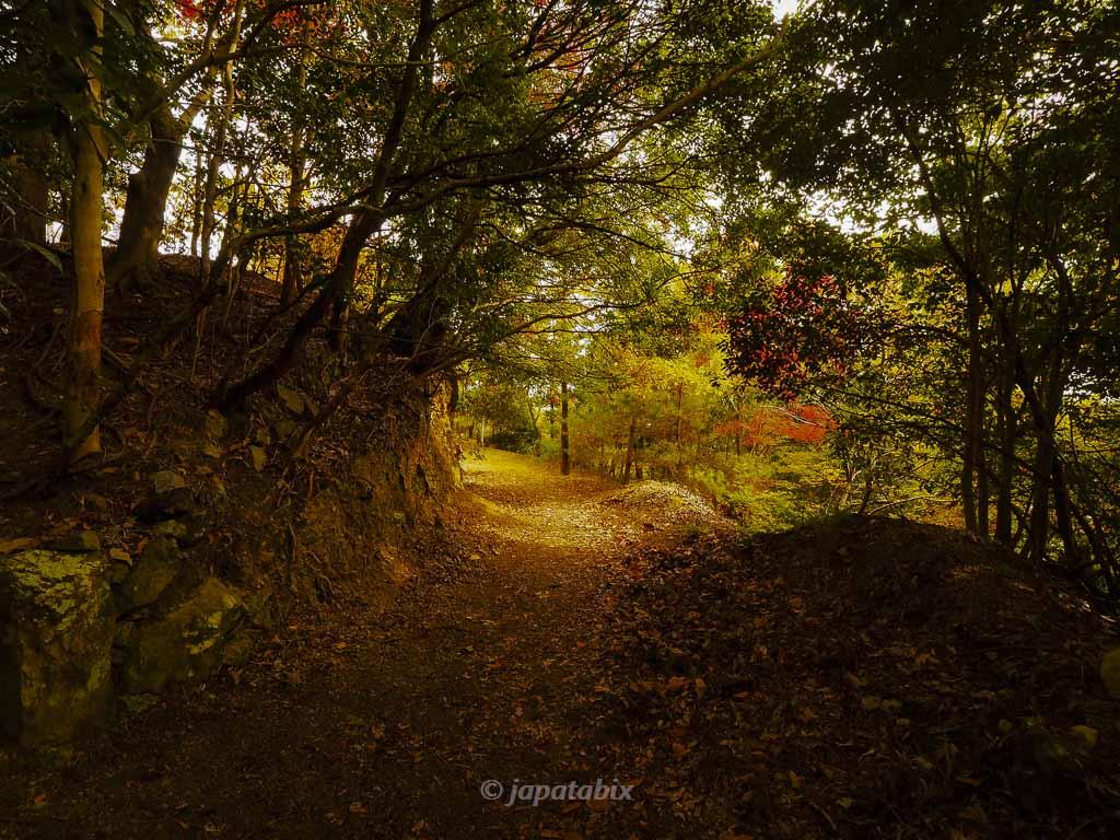 金蔵寺 見晴らし台への道