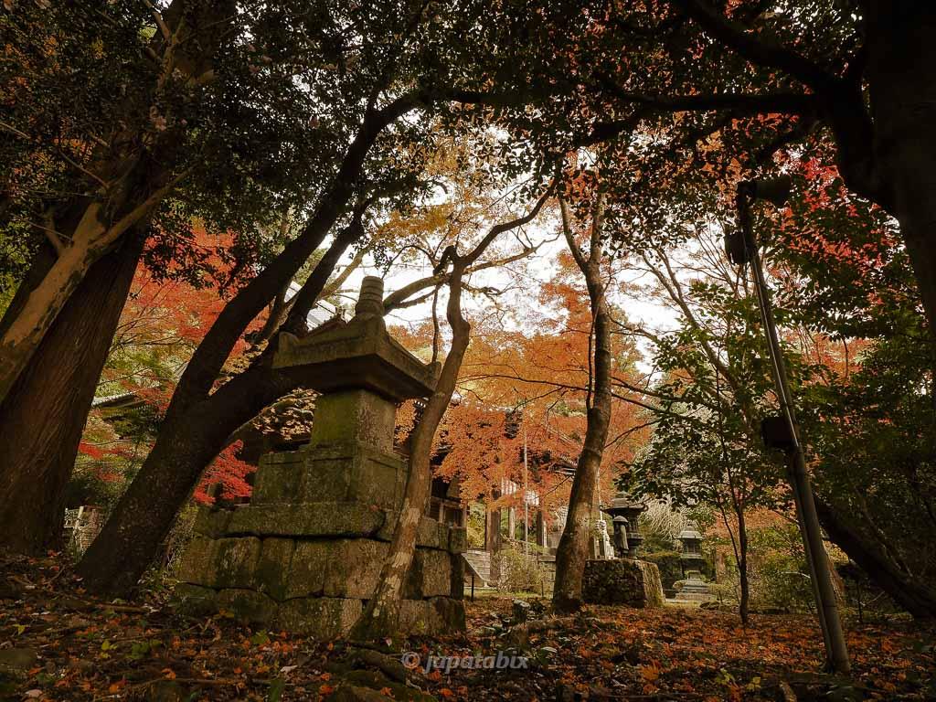 京都 金蔵寺 本堂の紅葉