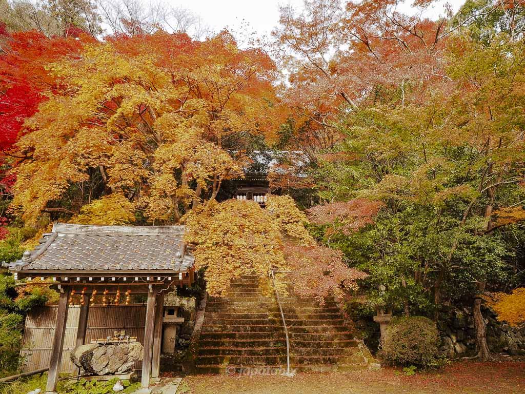 京都 金蔵寺 手水舎と本堂への石段