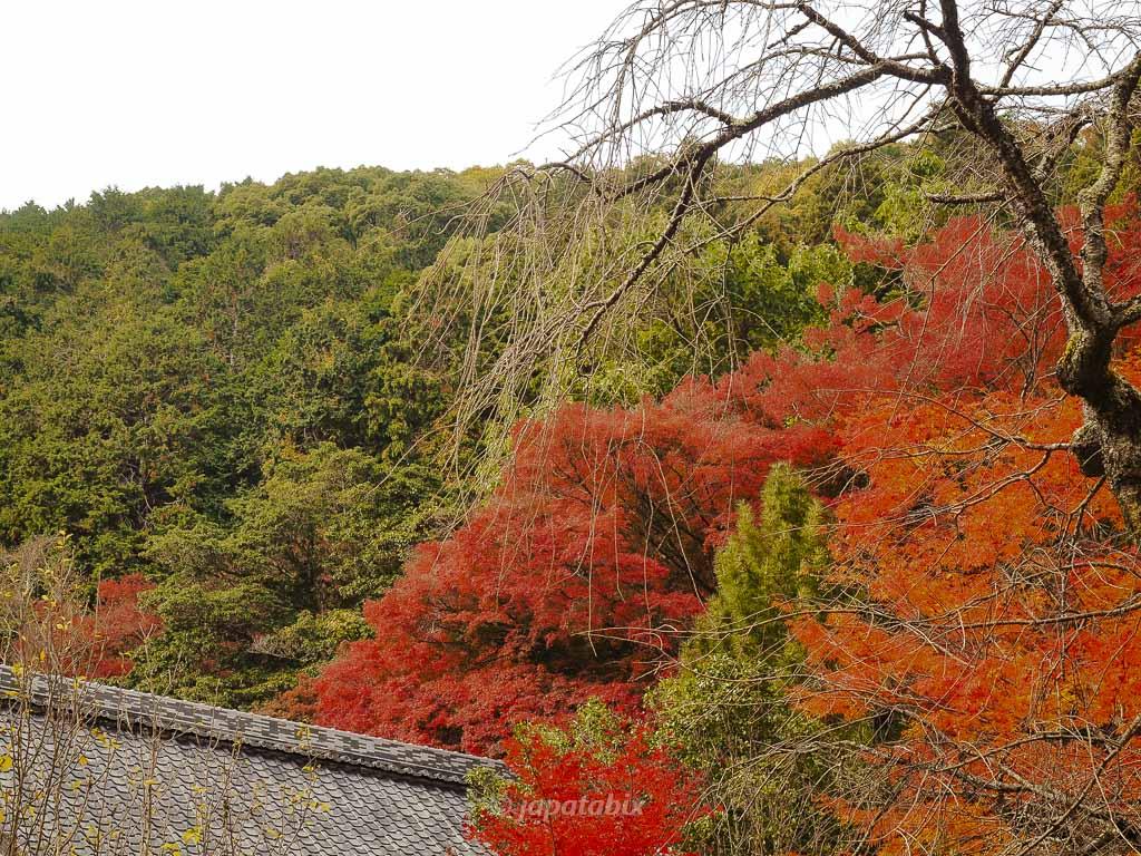 金蔵寺 山の紅葉