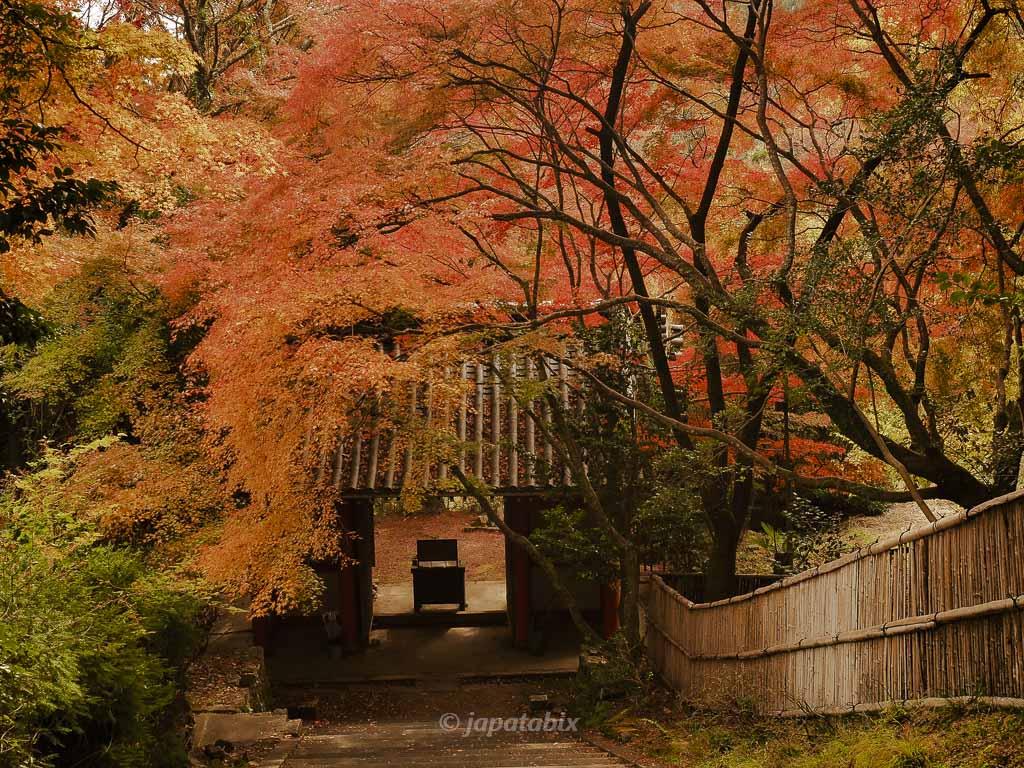 京都 金蔵寺 参道から仁王門を振り返る